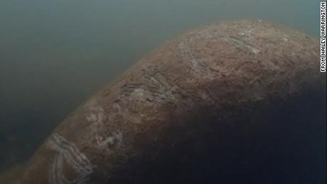 Manatee harassment under investigation after the word 'Trump' was found on an animal's back
