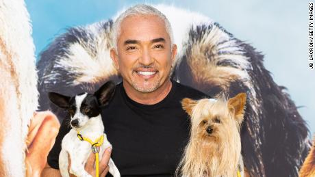 """Cesar Millan, seen here attending the premiere party for his new National Geographic series, is back to his old tricks (of teaching tricks) in """"Cesar Millan: Better Human Better Dog."""""""